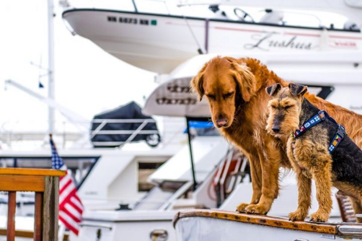 Boating etiquette dogs