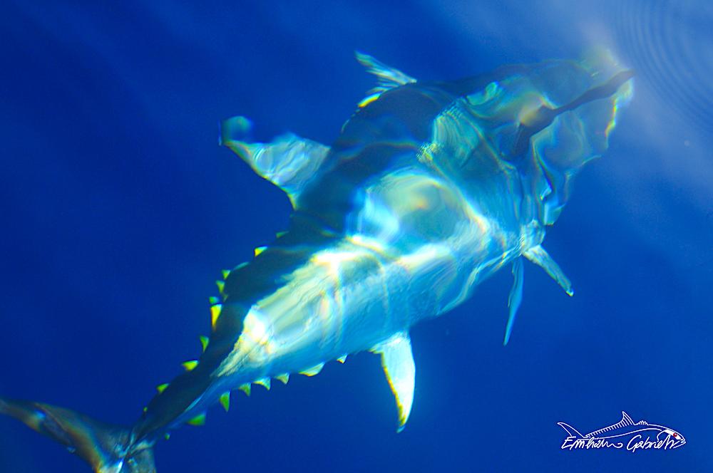 Tuna Drifting, Basics for beginners