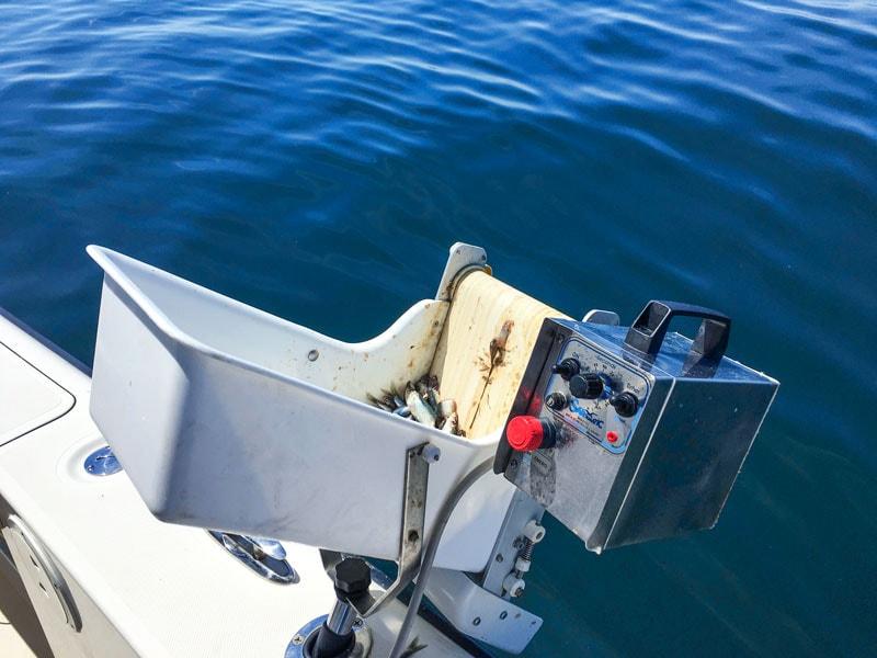 sardine dispenser