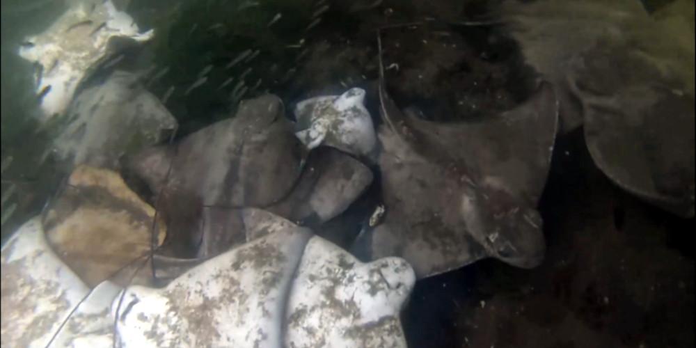 dead fish in Spain